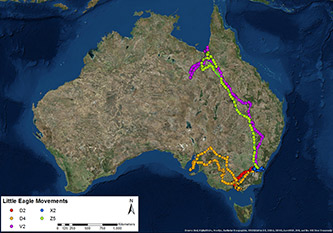 Little Eagle satellite tracker information showing flight paths of five birds