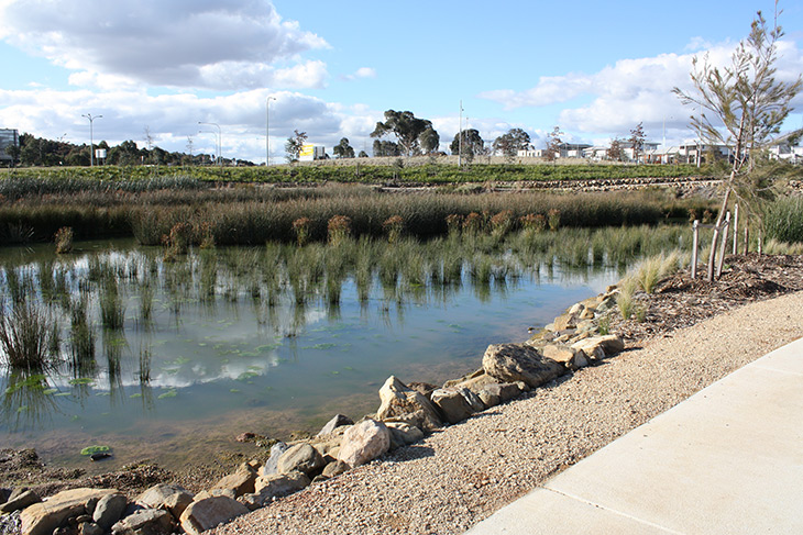 This wetland was established to improve water quality