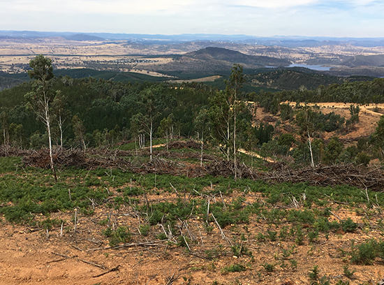 Example of the fuel reduction treatments in Blue Range testing different treatment method to retain native vegetation:  mechanical thinning using specialised equipment, physical removal (hand thinning and  edge pruning), and heaping using dozers.