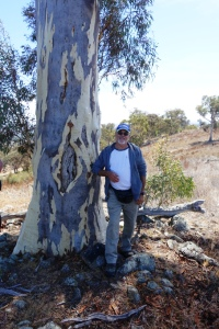 Ngunawal man, Wally Bell discovering a scarred tree during a cultural survey coordinated by Greening Australia.