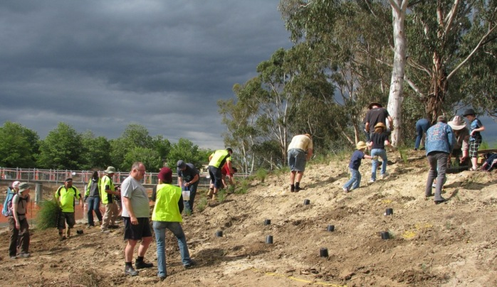 Planting the embankment with shrubs and grasses
