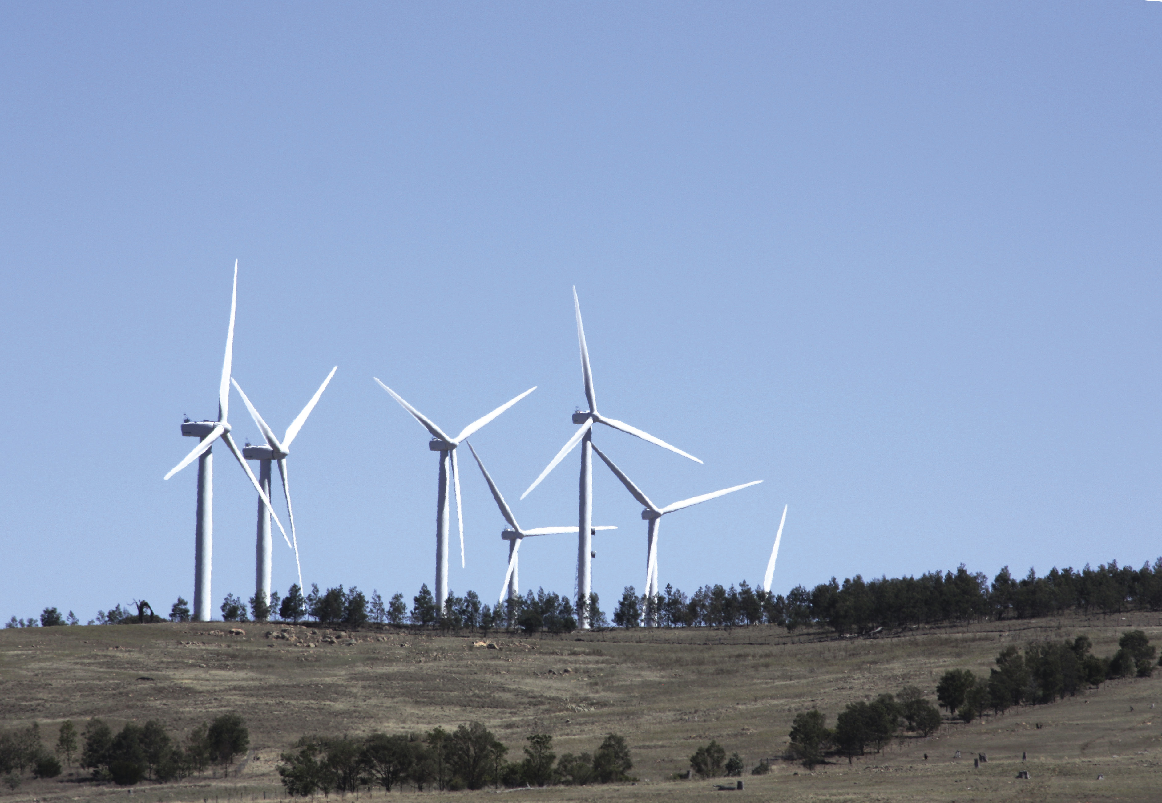Image of several wind turbines with a paddock sloping up to a treed ridge on which the wind turbines stand