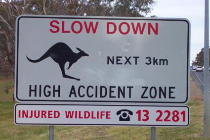 kangaroo warning sign image