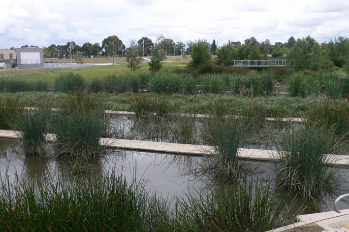 Shallow water zones, planted with local macrophytes (reeds) filter nutrients from the water at Norgrove Park