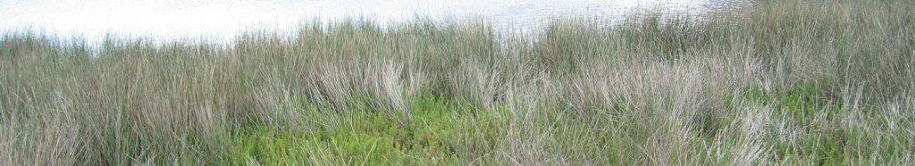 pond_vegetation_crop
