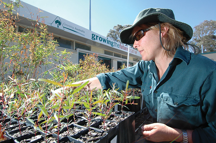 Greening Australia is working with the Directorate and TAMS to deliver the ACT Woodland Restoration Program