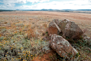 Photo: Rocks are an important feature in natural temperate grasslands. Jerrabomberra West Nature Reserve by C. Holly.