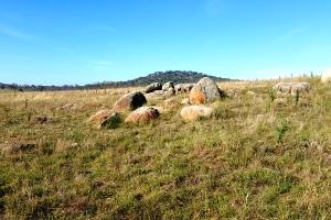 Rocky outcrop at Jerrabomberra West