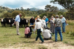 Landholders identifying native grasses in the field, near Tharwa at the Native Grass Identification Field Day